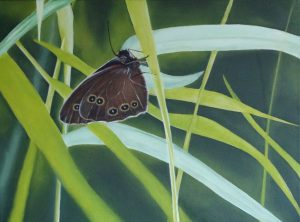 Vlinder in het groen (40x30cm, olie, 2013)